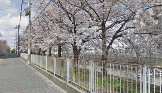 堺市三国ヶ丘桜の開花はまだ先?