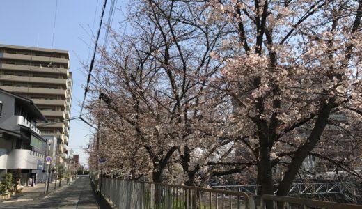 三国ヶ丘の桜は、7分咲きかな???今週満開かな!!