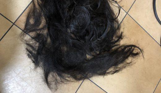 1年ぶりに娘の髪をカットしました!